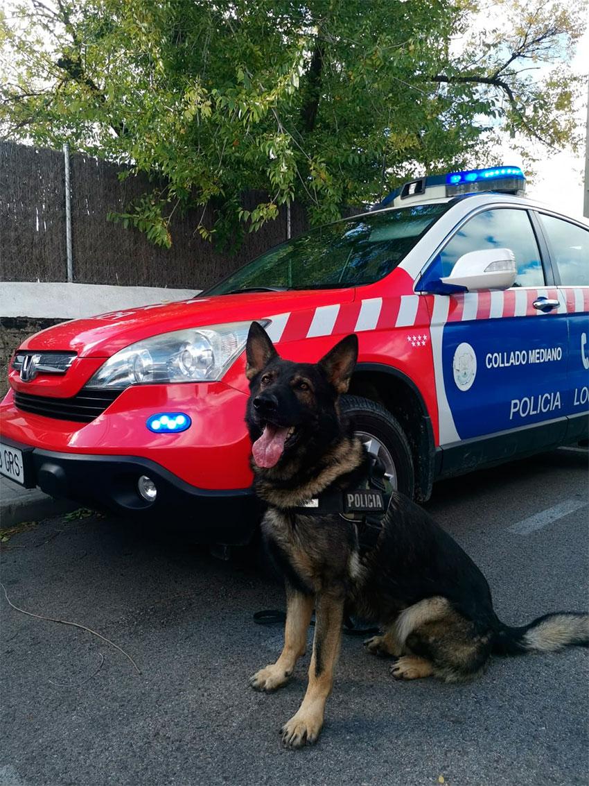 Unidad Canina policía local Collado Mediano